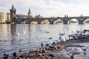 Karlsbrücke in Prag mit Blick vom Ufer